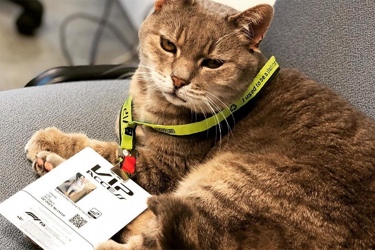 """F1エミリア・ロマーニャGP緊急任務! イモラのヌシ""""猫""""『フォルムリーノ君』を攻略せよ"""