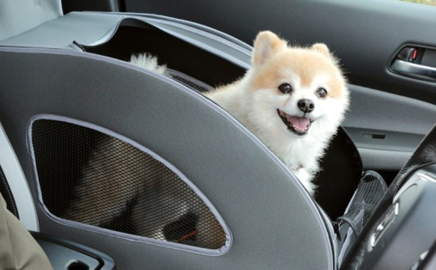 愛犬とのドライブが楽しくなる!ホンダの愛犬用純正アクセサリー「Honda Dog」の最新アイテム9選