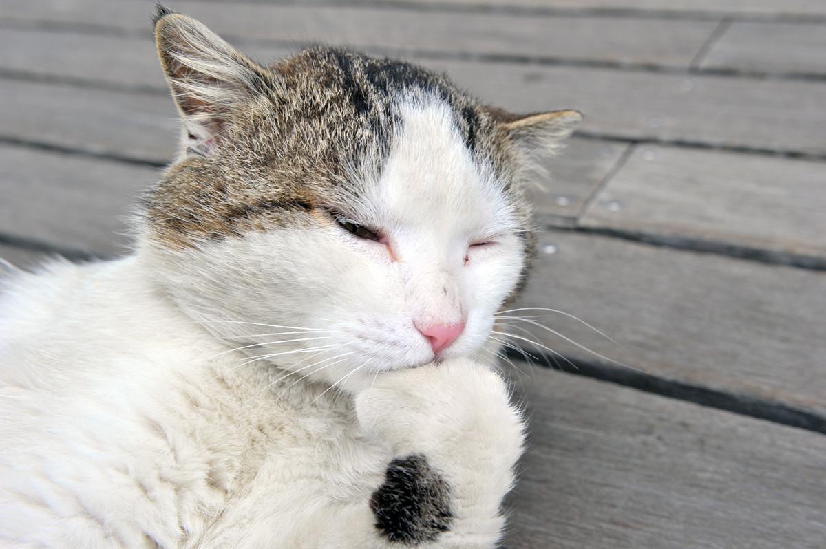ペットとドライブする愛犬&愛猫家は「自動車保険」が重要! 他人のクルマに傷を付けたときに使える「特約」とは