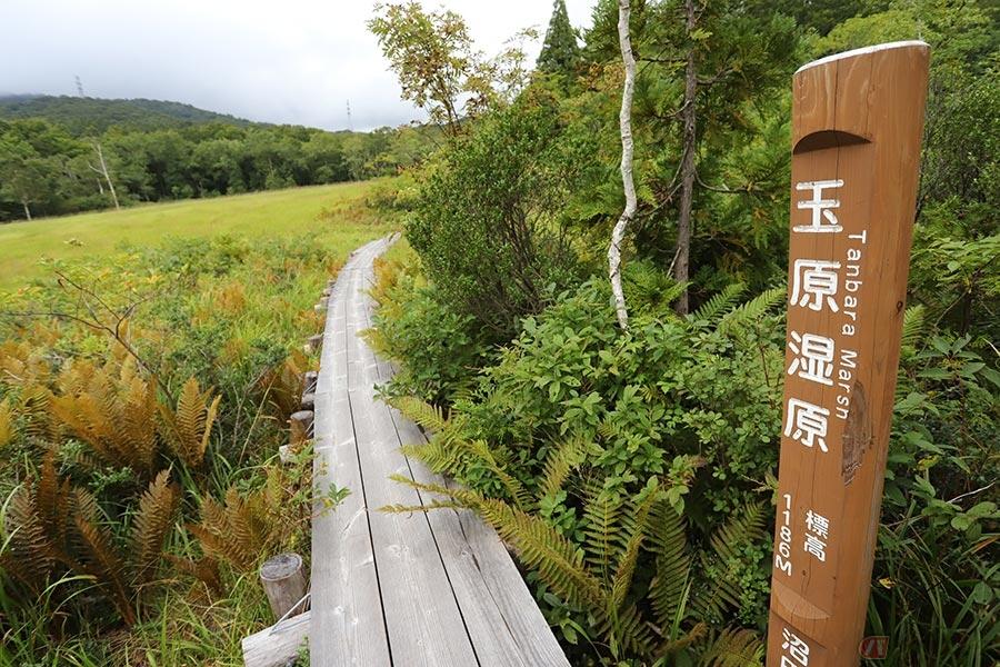 ワインディングを走り、湿原をトレッキング!? 「小尾瀬」と称される群馬県の玉原湿原に行ってみた
