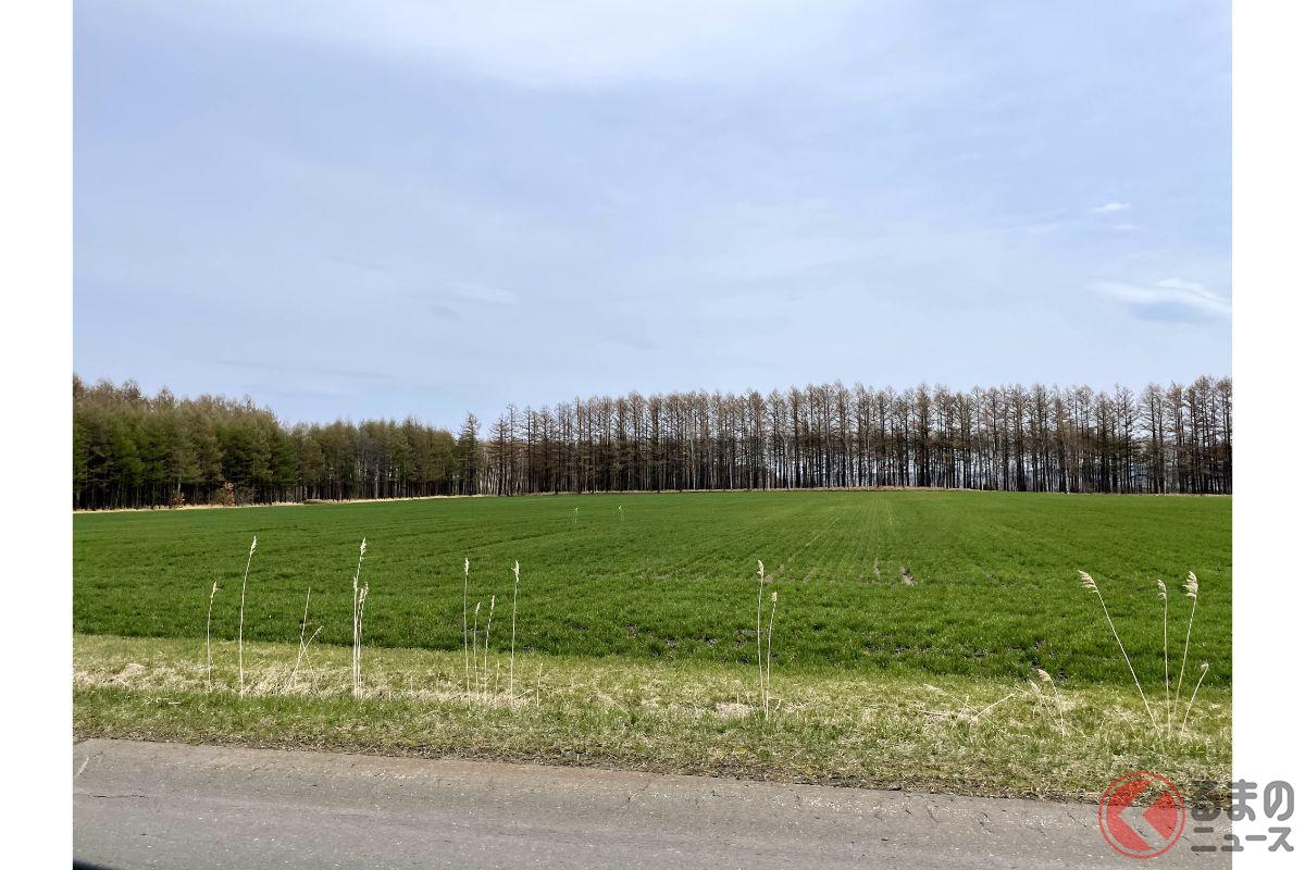森が「道路」のようになぜ整理? 北海道の不思議スポット! 実は農業に重要な存在だった?