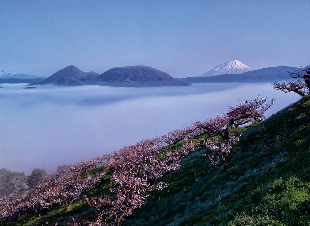 5月には梅の花が咲き乱れ雲海とのコラボも見られる(北海道 壮瞥公園)【雲海ドライブ&スポット Spot 13】