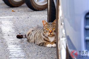 猫バンバンは叩きすぎると逆効果!? 車のエンジンルームに入った猫の対策とは?