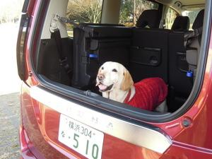 プロの愛犬家に聞く! わんことの旅行に最適なクルマの条件とオススメ車種