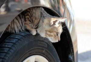 【寒い季節に必須対策! 】エンジンフードに小動物を入れない対策を!!