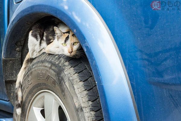 冬に多発「クルマのボンネットにネコ侵入」要注意 なぜネコはエンジンルームを好む?