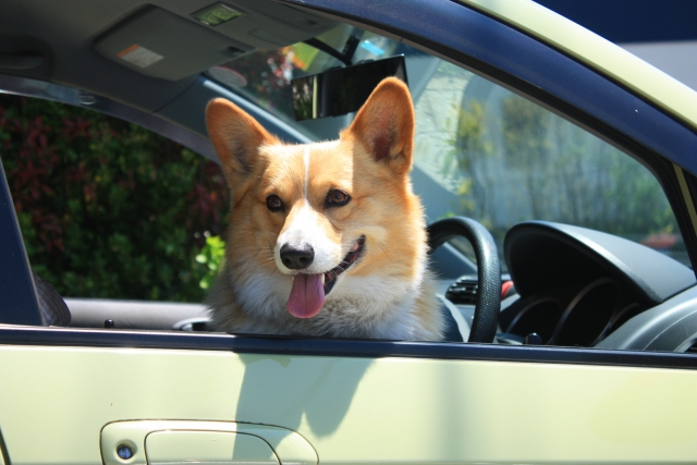 たまに見かける、ワイパーにビニール袋を引っ掛ける車。これって違反にならないの?