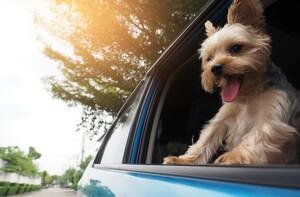 愛犬家要注意! 犬を載せる時にやりがちな重大な交通違反とは?