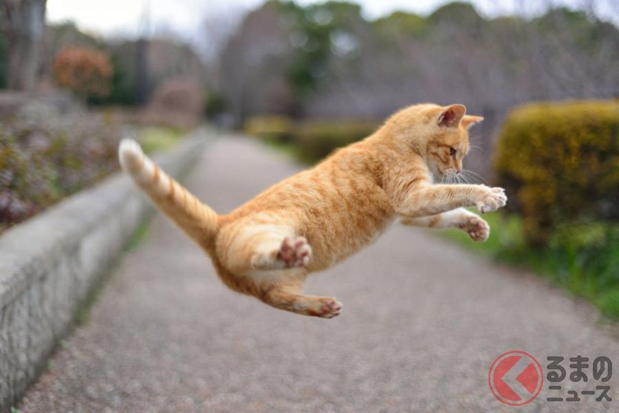 「エンジンの上で4匹生まれた!」クルマ乗る前は「猫バンバン」必須? 毎年起こるトラブルに注意