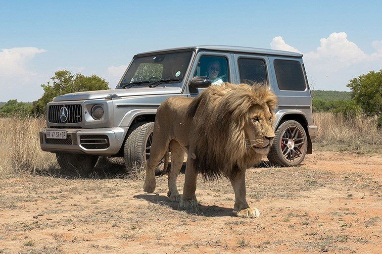メルセデスAMG G63を南アフリカでテスト 百獣の王とオフローダーの王が対決?