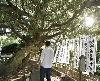 湘南〈江の島〉の神様とは? 江島神社と龍口明神社を巡る/神社巡拝家・佐々木優太の「神社拝走記」【第2回】
