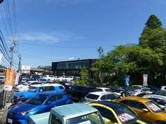 展示車は常時50台以上、非公開在庫含め敷地には150台以上!