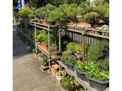 穏やかな商談をしてもらう為、簡易庭園をご用意しました。