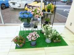ショールームには季節の花を飾ってお迎えします