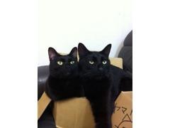 看板猫の黒猫の「ヤマト」と「なでしこ」です★