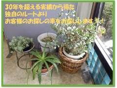 お気軽にお問合せください。Mail:info@anteroad.jp    TEL:0066-9711-083279      http://www.anteroad.jp/