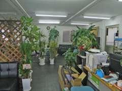 観葉植物を多くあしらった店内でリラックスしながら商談・ご相談ください。お待ちいたしております♪