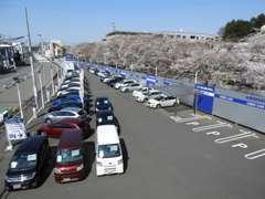 広くて長い展示場です☆小田急柿生駅より徒歩10分。県道世田谷町田線沿い。駅まで送迎いたします!