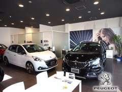 展示車がずらり。常時7台以上の新車を置いております。ご希望の車が見つかりますよ。