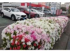 花が綺麗な展示場です♪