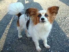 愛犬チョコです。お近くに来た際には、是非、お立ち寄りください。