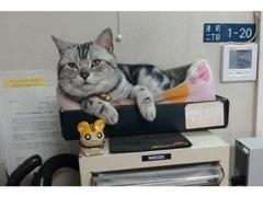 愛猫のイチローちゃんもいます。