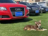 オートスタイルトレーディング南大阪店/株式会社オンフリーク null