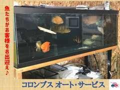 魚たちと一緒にお客様をお待ちしております!