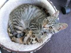 猫が3匹居ます。人が来ると隠れちゃうけど、ちゅーるが大好き!
