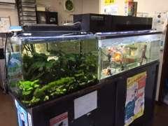 """お客様の気持ちを""""良い意味で""""落ち着いてもらえるようにと、たくさんの魚たちと水槽が置いてあります。癒されますよ~。"""