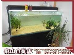 熱帯魚を飼っている人に悪い人はいません!!居心地良い商談スペースとなっておりますので、ぜひお気軽にご来店下さい!!