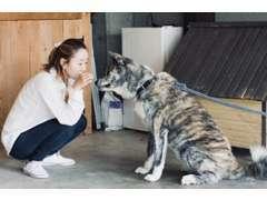 優しい秋田犬ちゃん看板犬です♪みなさんに会えるのを楽しみに待っております!ぜひ会いにきてください!