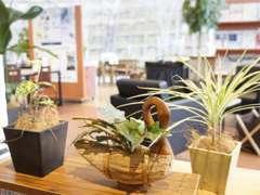 店内には観葉植物を多く配置する事で、ご来店いただいたお客様に、リラックスして頂けるよう工夫しております。