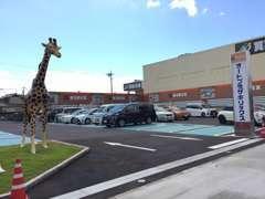 キリンが立っている所が入口です。入ってすぐがお客さま駐車場になっております。