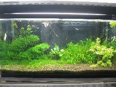 熱帯魚好きのお客様には堪らない水槽も2種類御座います。
