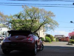 フォルクスワーゲン ニュービートルカブリオレ LZ 過去毎車検VW実施済/幌リヤガラス対策済み