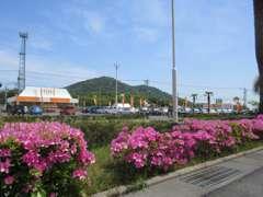 大きな展示スペース♪幅広いお車を展示しています(*^_^*)オレンジ色の大きな看板が目印です★