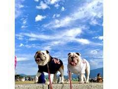 看板犬のバズーカ君(左)とベンジー君(右)がお迎えします♪