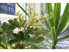 店舗には観葉植物でお出迎え致します。店内の空気もこの子達のおかげで新鮮になっております。