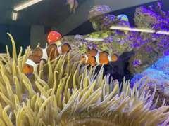 当店といえばこのお魚たち。カラフルな熱帯魚をペットとして飼っています。ご来店になった際にはご覧になって下さいね☆