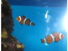 かわいい魚達が元気に泳いでいます♪ぜひ覗いて見て下さいね♪