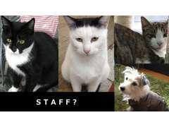 スタッフよりも多い動物たち。地域猫運動にも協力します。