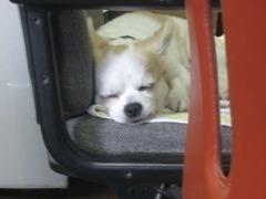 看板犬のバロンです☆アットホームなお店です。どうぞお気軽にお立ち寄りください♪