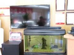 TVや熱帯魚を観ながらお待ちいただけます!