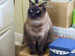 ちょっとメタボなポンタです♪甘えん坊で、人懐っこいけど怒ると誰よりも怖いセキュリティ担当猫です!!